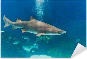 Pixerstick Aufkleber Sandtigerhai (Carcharias taurus) Unterwasser-Nahaufnahme portra
