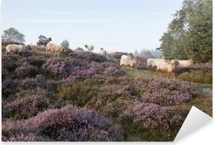 Pixerstick Aufkleber Schafe auf lila blühender Heide