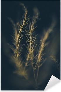 Pixerstick Aufkleber Sonnenbeschienenem Grassp