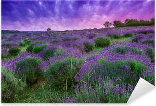 Pixerstick Aufkleber Sonnenuntergang über ein Sommer Lavendel-Feld in Tihany, Ungarn