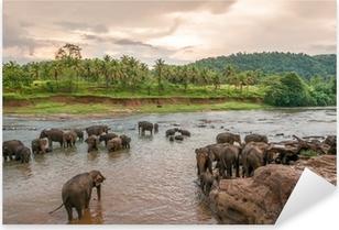 Pixerstick Aufkleber Swimmong Elefanten