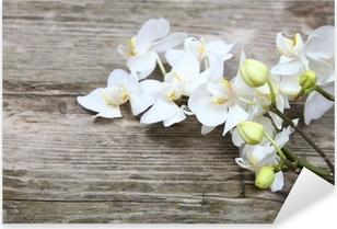 Pixerstick Aufkleber Weiße Orchidee (Phalaenopsis)p