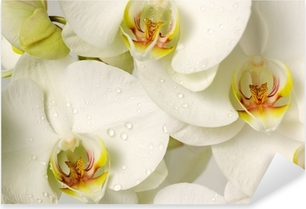 Pixerstick Aufkleber Weiße Orchideen