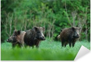 Pixerstick Aufkleber Wildschweine mit Wald-Hintergrundp