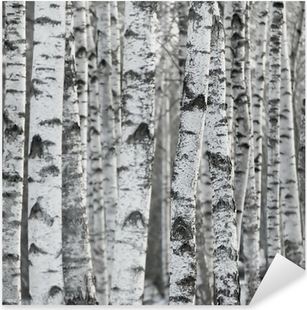 Pixerstick Aufkleber Winter Birch Tree Forest Hintergrund