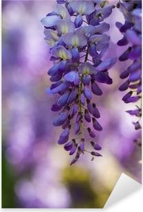 Pixerstick Aufkleber Wisteria in voller Blüte