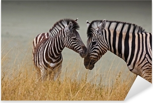 Pixerstick Aufkleber Zebras - Mutter und Sohn
