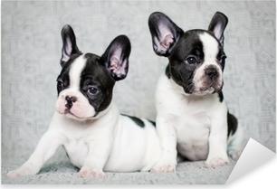 Pixerstick Aufkleber Zwei französisch Bulldogge Welpenp