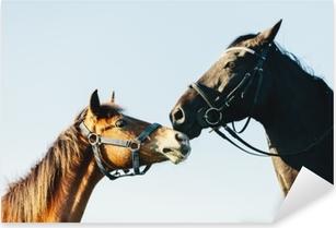 Pixerstick Aufkleber Zwei reinrassige Pferde auf Hintergrund des blauen Himmels