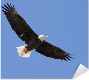 Autocolante Pixerstick Bald eagle