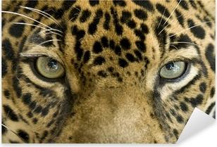 Autocolante Pixerstick close up the eyes of a beautiful jaguar or panthera onca