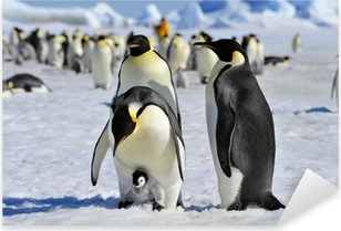 Autocolante Pixerstick Emperor Penguin