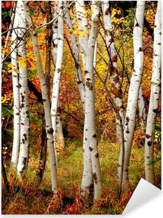 Autocolante Pixerstick Fall Birch Trees