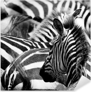 Autocolante Pixerstick pattern of zebras