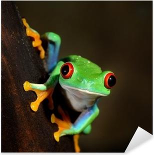 Autocolante Pixerstick red-eye frog Agalychnis callidryas in terrarium