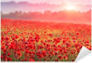 Autocolante Pixerstick red poppy field in morning mist