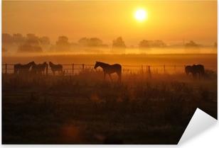 Autocolante Pixerstick Sonnenaufgang auf einer pferdeweide
