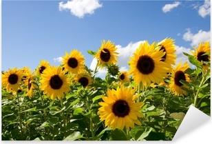 Autocolante Pixerstick Sonnenblumen