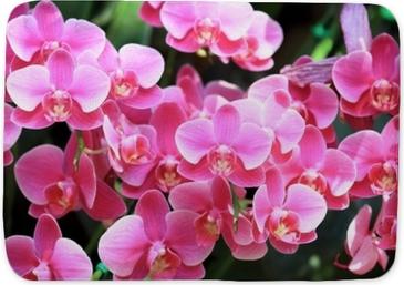 Badmat De mooie roze bloem van kleurenorchideeën en groene bladerenachtergrond in de tuin bij de winter of de lentedag voor het idee van de prentbriefkaarlandbouw, als aardconcept.