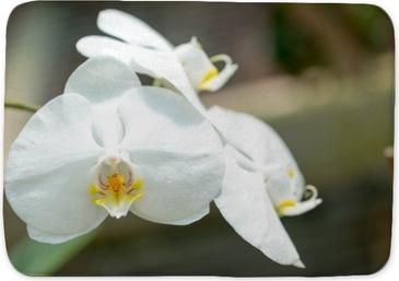 Badmat Orchideeën
