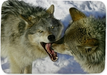 Fighting Wolves Canvas Print Pixers We Live To Change