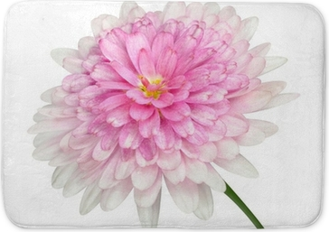 Pink Dahlia Flower Large Center Isolated On White Canvas Print Pixers We Live To Change