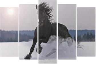 Beş Parçalı Kar üzerinde Frizce at