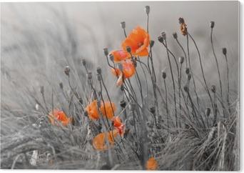 Bild auf Acrylglas Mohnblumen mit grauem Hintergrund