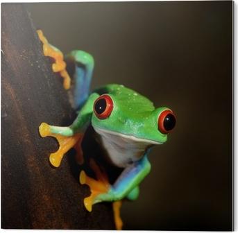 Bild auf Acrylglas Rote-Augen-Frosch Rotaugenlaubfrosch im Terrarium