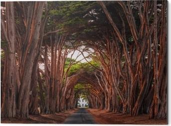Bild auf Alu-Dibond Erstaunlicher Zypressebaumtunnel an der nationalen Küste Point Reyes, Kalifornien, Vereinigte Staaten. Bäume im Licht der untergehenden Sonne rot gefärbt.
