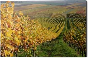 Bild auf Alu-Dibond Herbst Weingut Landschaft in Rheintal, Deutschland