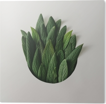 Bild auf Alu-Dibond Kreative minimale anordnung von grünen blättern. Naturkonzept. flach liegen.