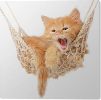 Bild auf Alu-Dibond Nette rothaarige Kätzchen in der Hängematte