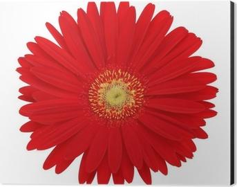 Fototapete Grau Gerbera Rosen Blütenblätter Blumen Blüten Blätter