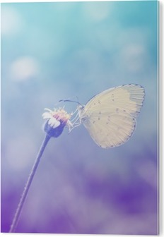 Bild auf Alu-Dibond Schmetterlinge auf Blumen in Pastell Stil.