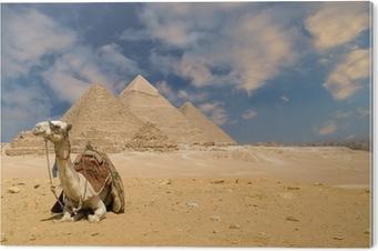Bild auf PVC Die Pyramiden Kamel