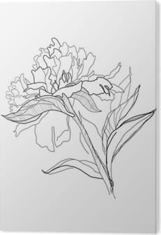 pfingstrose zeichnen blumen zeichnung, fototapete zeichnen pfingstrose • pixers® - wir leben, um zu verändern, Design ideen