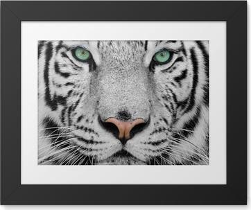 Bild i Ram Vit tiger