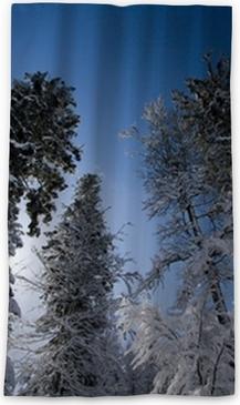 Arbre Sapin Neige Paysage Neigeux Hiver Montagne Ciel Nature