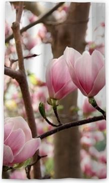 Pink magnolia flowers in bloom wall mural pixers we live to change mightylinksfo