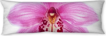Close-up of pink Orchid flower (Cymbidium) isolated on white background. Body Pillow