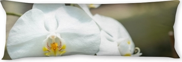 Orchids Body Pillow
