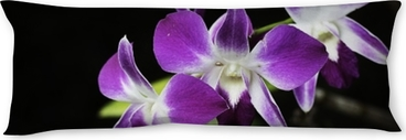 Pink Orchids at flowering with plain black background.Thailand Body Pillow