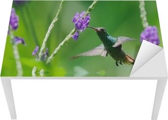 Smuk kolibri i refleksion Bord og skrivbordfiner