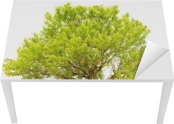 Træ isoleret på en hvid baggrund Bord og skrivbordfiner