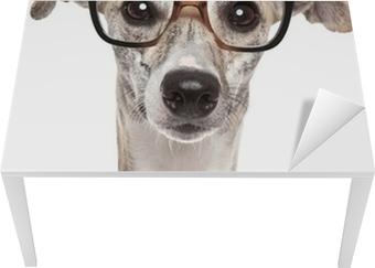 ae81d9878bfc Pixerstick-klistremerke Hund i briller på hvit bakgrunn • Pixers® - Vi  lever for forandring