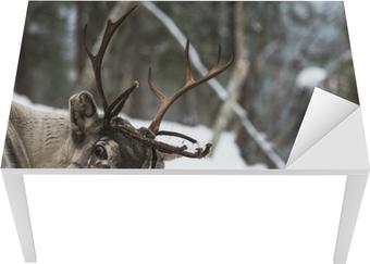 Bord- og skrivebordsklistremerke Reineren står i snøen