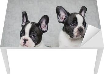 Bord- og skrivebordsklistremerke To franske bulldog valper