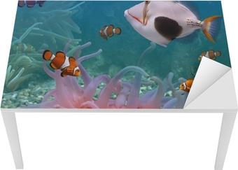 Bord- og skrivebordsklistremerke Tropiske fisk