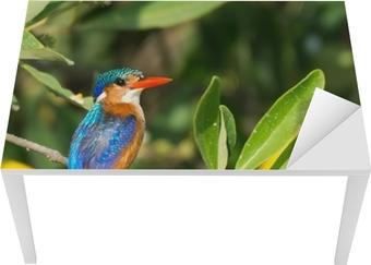 Bureau- en Tafelsticker Malachiet Kingfisher (Alcedo cristata)